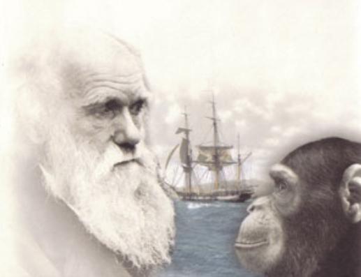 Darwin | Hobby Keeper Articles