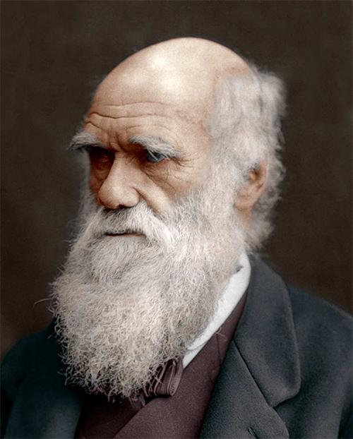 Portrait Of Darwin | Hobby Keeper Articles